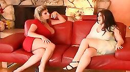 Catfight on the sofa